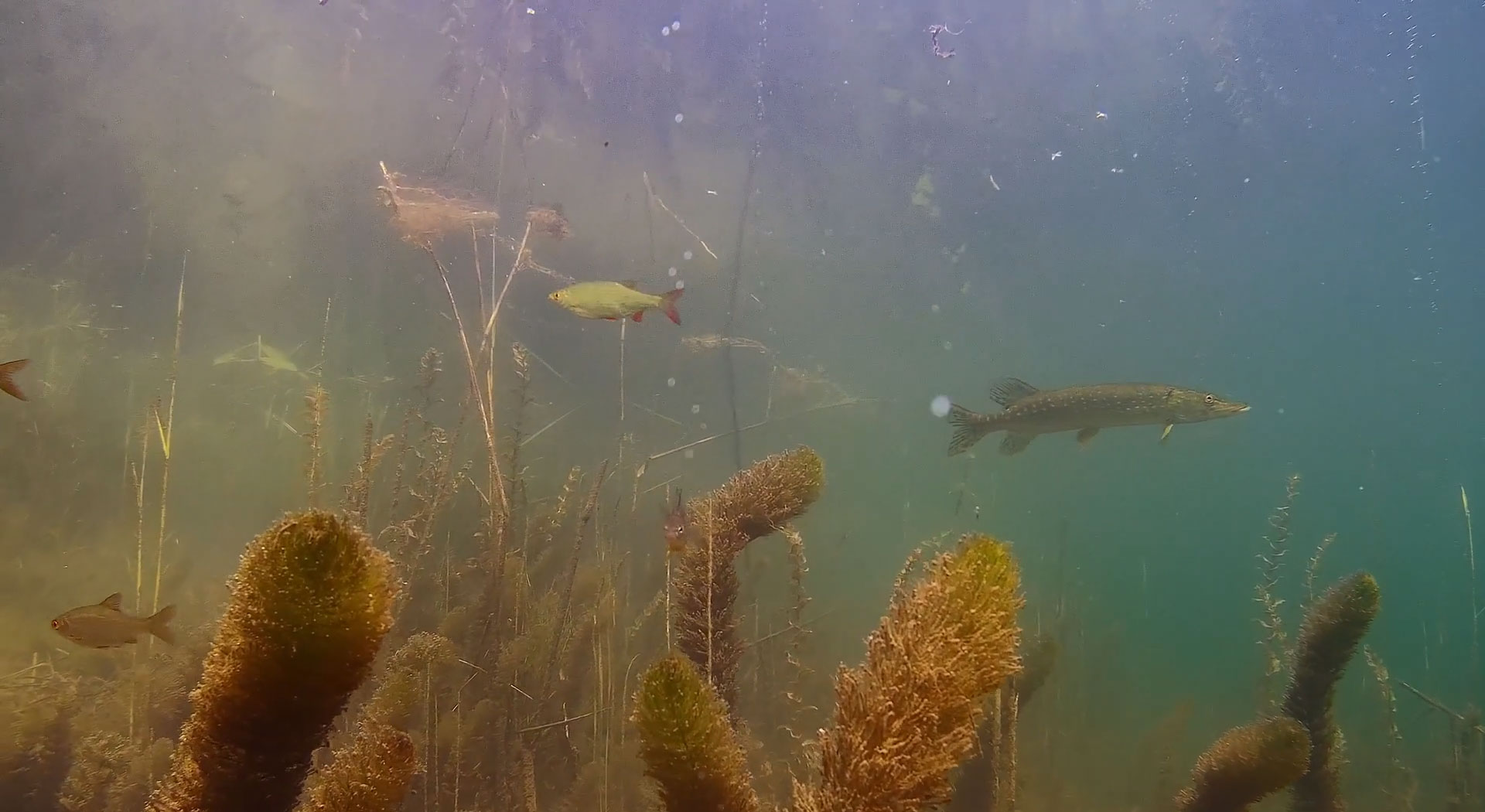 northern-pike-underwater-drone.jpg